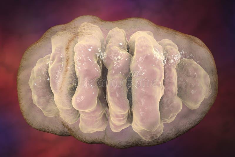 Mitocondrio, organelli cellulari che producono l'energia illustrazione vettoriale