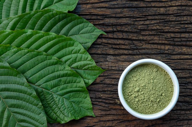 Mitragynina speciosa or Kratom leaves with powder product in white ceramic bowl and wooden table background stock photo