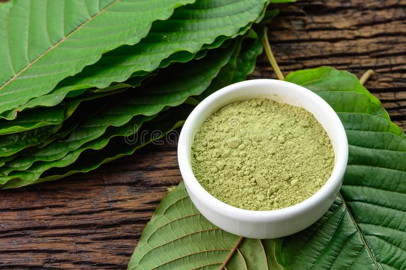 Mitragynina speciosa or Kratom leaves with powder product in white ceramic bowl and wooden table background royalty free stock images