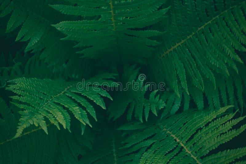 Mitt av mörker - grönt ormbunketräd i den infödda busken, textur för naturlig bakgrund arkivfoton