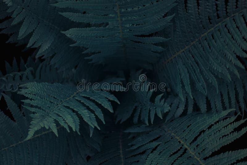 Mitt av mörker - grönt ormbunketräd i den infödda busken, textur för naturlig bakgrund royaltyfri bild