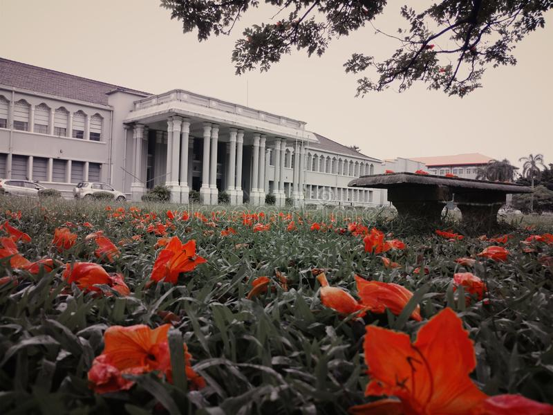Mitt Beautyful universitet på blommasäsongen arkivbilder