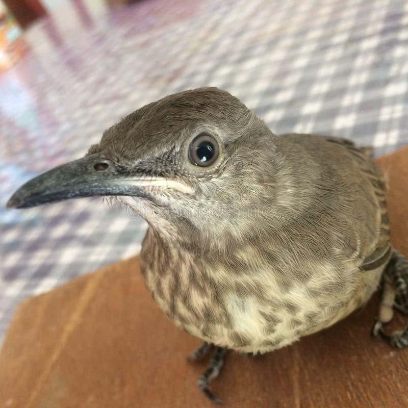 Mitt fågelhusdjur royaltyfri foto