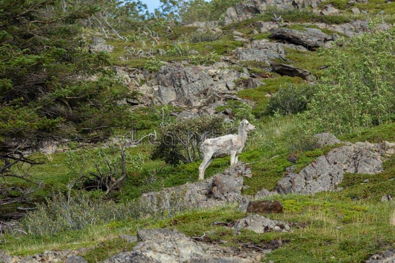 Mitt för Alaska djurlivbeskydd royaltyfri fotografi