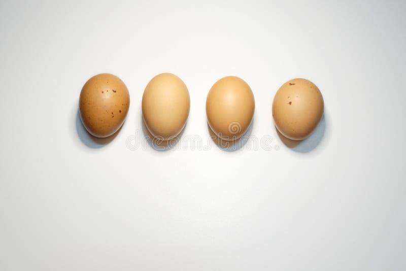 Mitt för fyra ägg på vit bakgrund royaltyfria foton