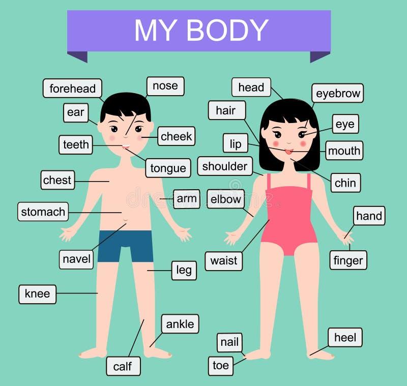 Mitt förkroppsliga Lära mänskliga delar av kroppen Bildande vektorillustration för ungar Barninfographics royaltyfri illustrationer