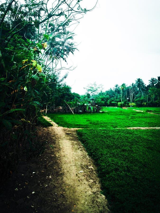 Mitt fria ställe för by i gampahaen, Sri Lanka royaltyfria foton