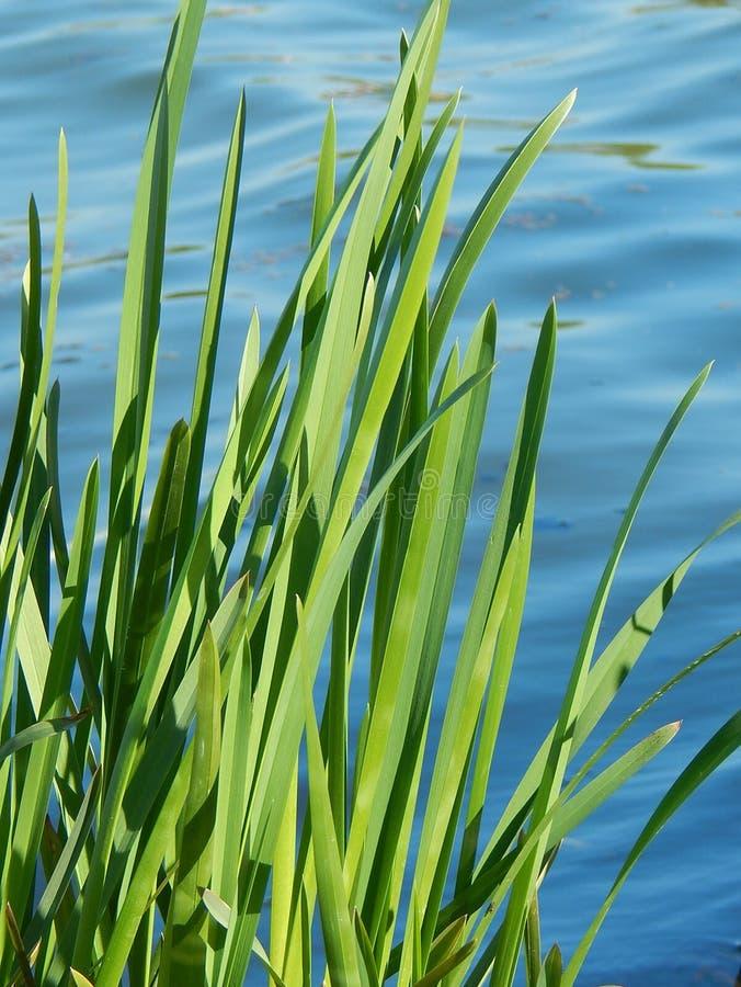 Mitt lynne är lugna vatten och kalla gräsplaner royaltyfri bild