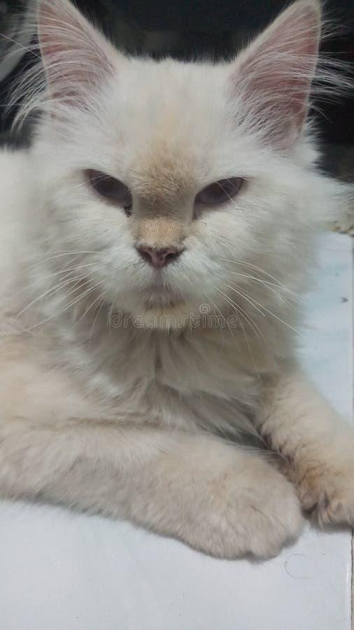 Mitt namn är Kitty The Sweeties Cat fotografering för bildbyråer