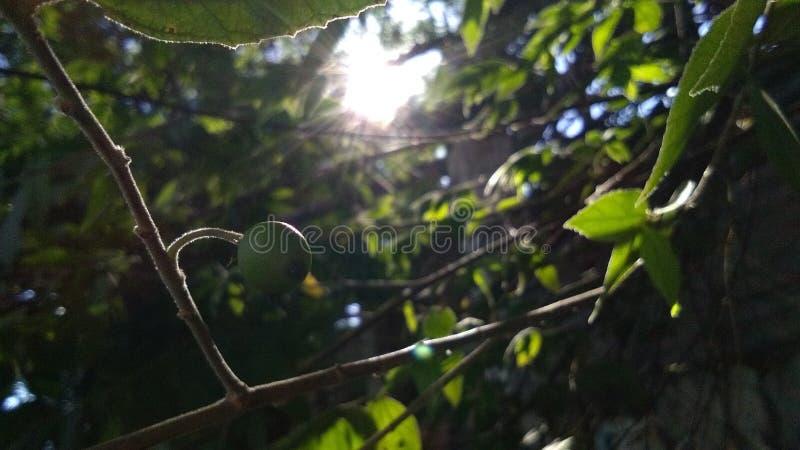 mitt solsken dig arkivbild