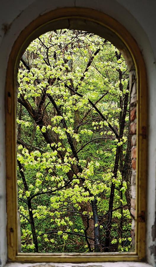 mitt treefönster arkivbilder