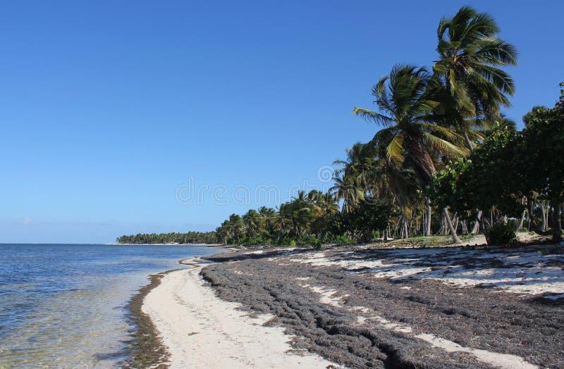 Mittag in Meer in der Dominikanischen Republik lizenzfreies stockbild