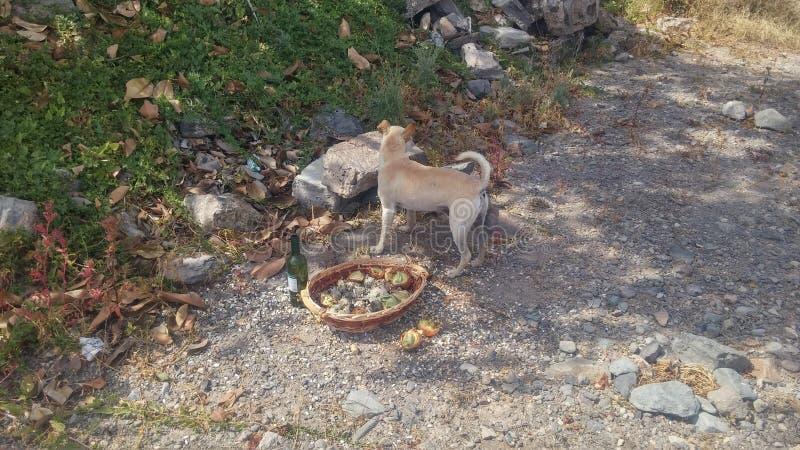 Mittagessen mit Hund stockbilder