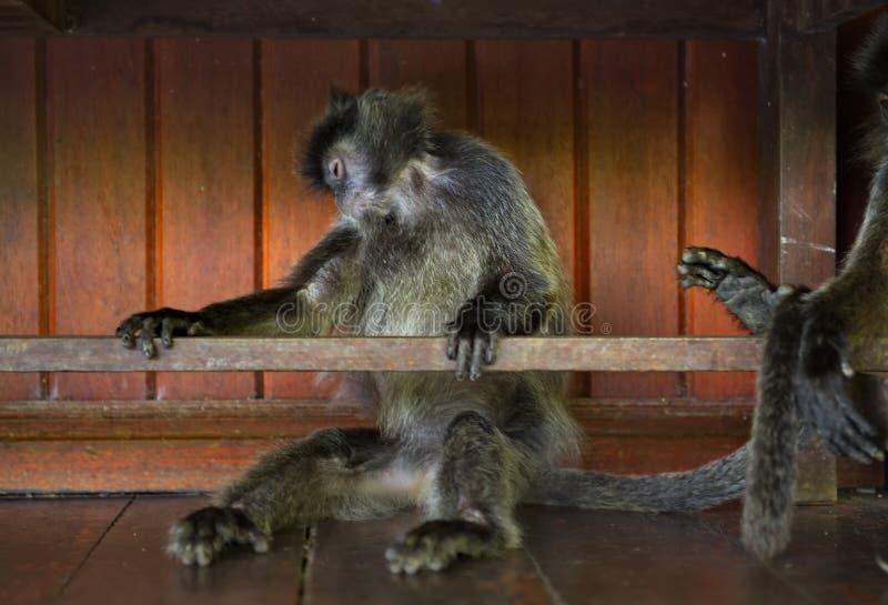 Mittagspause an den Affen lizenzfreies stockbild