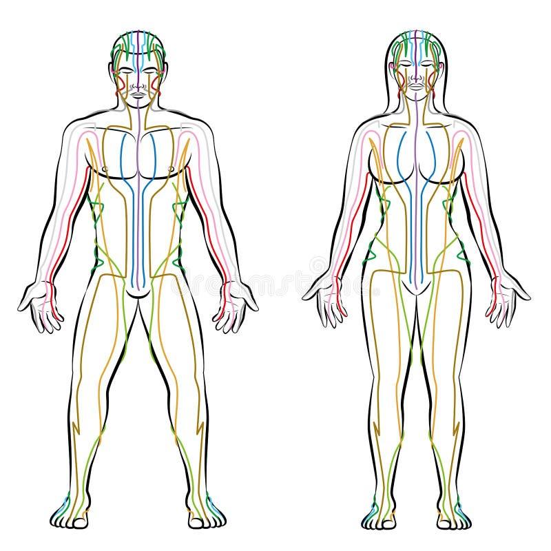 Mittagssystem-männlich-weiblicher Körper farbige Meridiane lizenzfreie abbildung