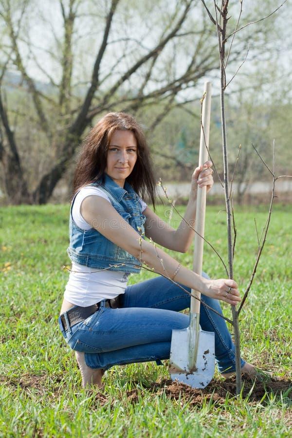 Mittelalterfrau, die Baum pflanzt lizenzfreie stockbilder