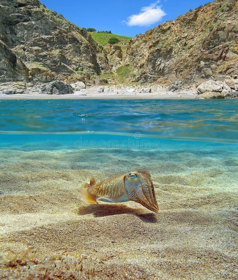 Mittelmeerbucht mit den Kopffüßern Unterwasser lizenzfreie stockfotos
