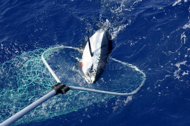 Mittelmeerfischen und Freigabe des blauen Flossethunfischs stockfoto