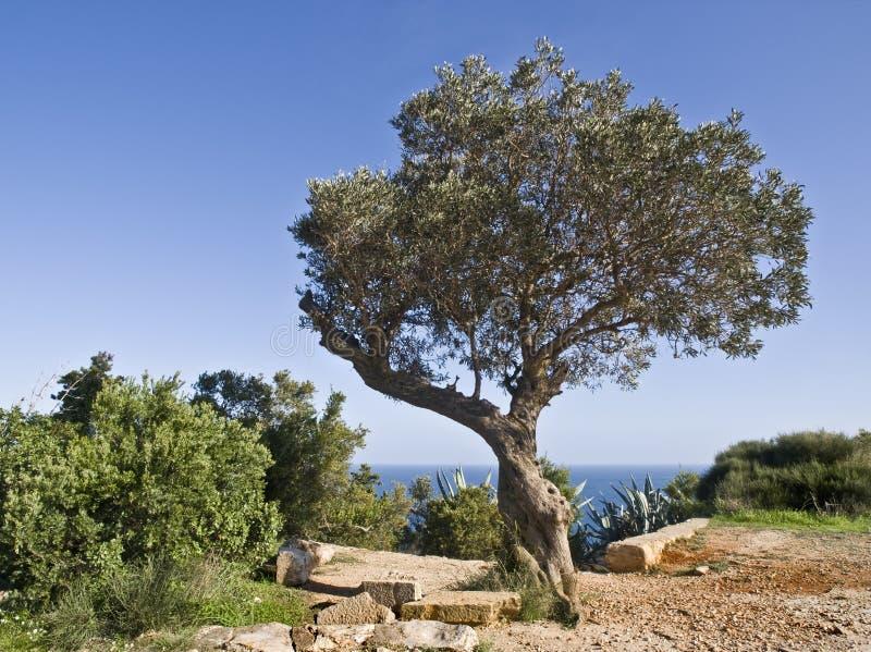 Mittelmeerlandschaft lizenzfreies stockbild