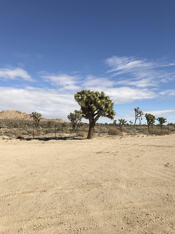 Mitten in Wüste stockfoto