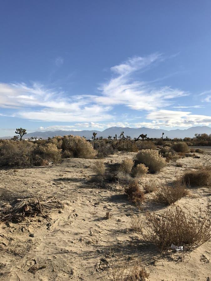 Mitten in Wüste stockbilder