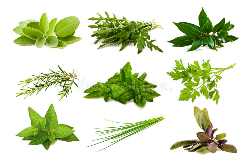 Mix aromatic herbs stock photography