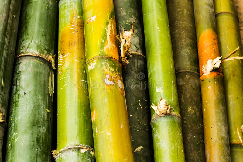 Download Mix bamboo stock photo. Image of culture, japanese, japan - 27136880