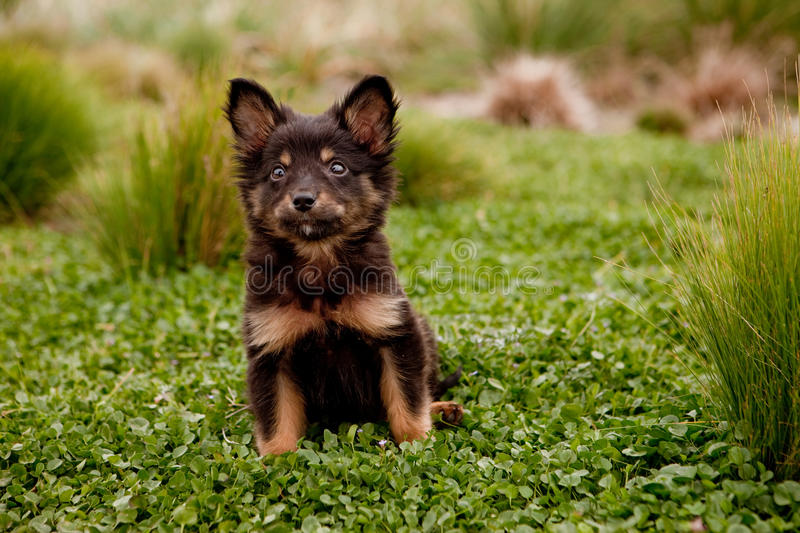 Mix breed puppy. Sitting on a log in the forest royalty free stock photos