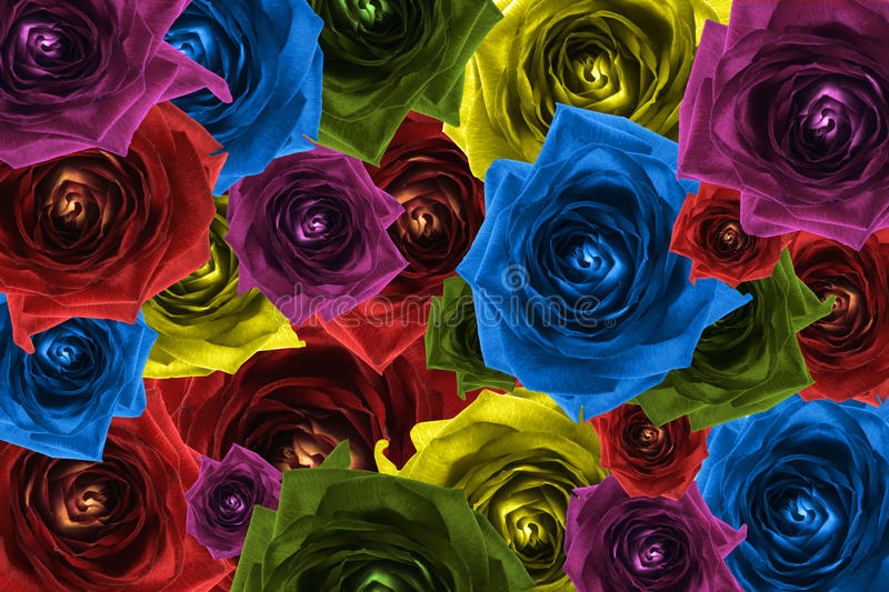 Mix collage of rose flowers rainbow background royalty free illustration
