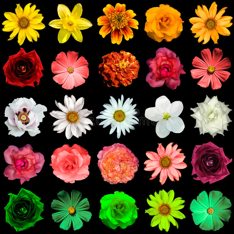 Mix collage of yellow, red, white, rose, green flowers stock image