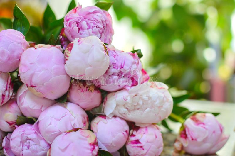 Gentle pink beautiful peonies on a table royalty free stock photos
