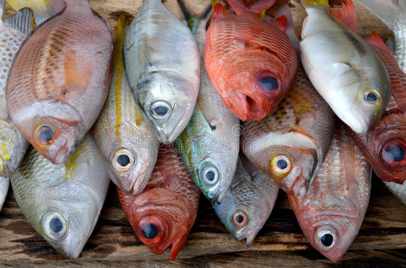 Mix colorful sea fishes arranging. Mix colorful sea fishes from fishery market with studio lighting royalty free stock photo