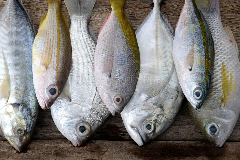 Mix colorful sea fishes arranging. Mix colorful sea fishes from fishery market with studio lighting stock photo