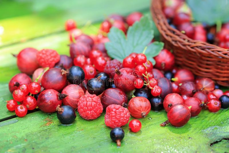 Mix of different summer berries on a wooden background royalty free stock image