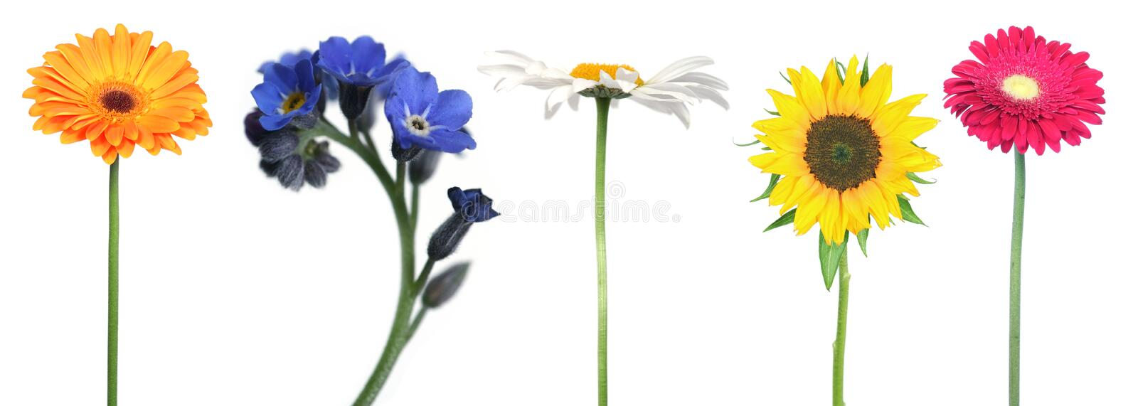 Download Mix of flowers stock image. Image of grow, detail, isolation - 11456141