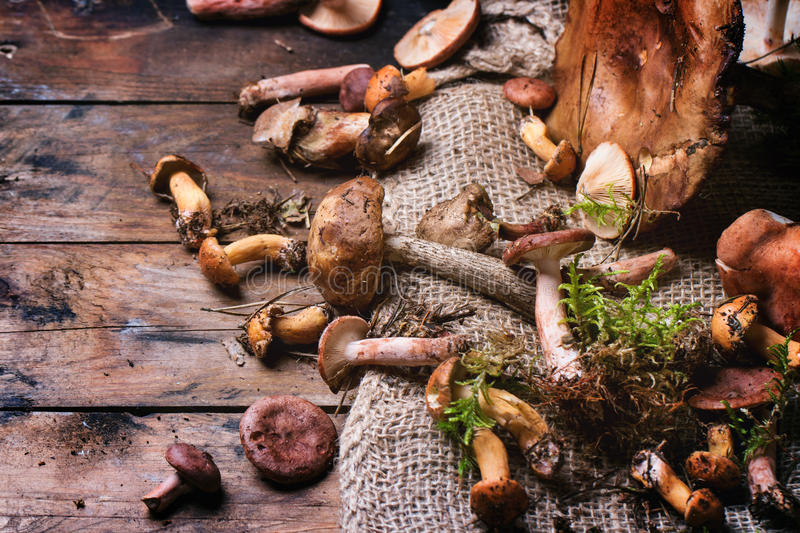 Mix of forest mushrooms. Over old wooden table. See series royalty free stock photo