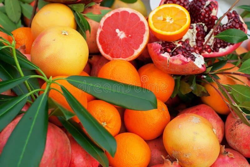 Download Mix of fresh citrus fruits stock photo. Image of grapefruit - 27825206