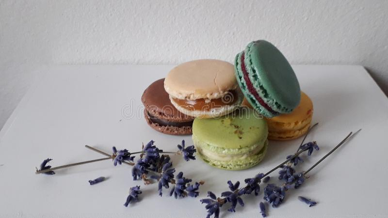 Mix macarons decorated of levander flowers stock image