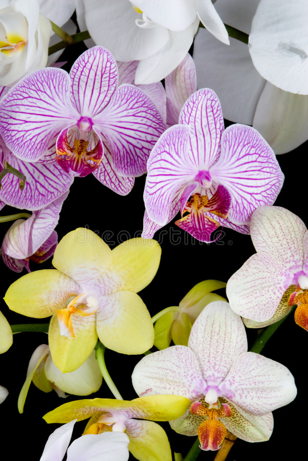 Mix Orchids stock image