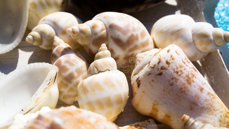 Mix of snail shells and seashells. Mix of different snail shells and seashells stock photography