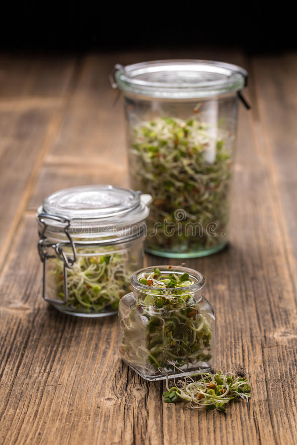 Mix of sprouted seeds. In glass jars on a wooden background stock photos