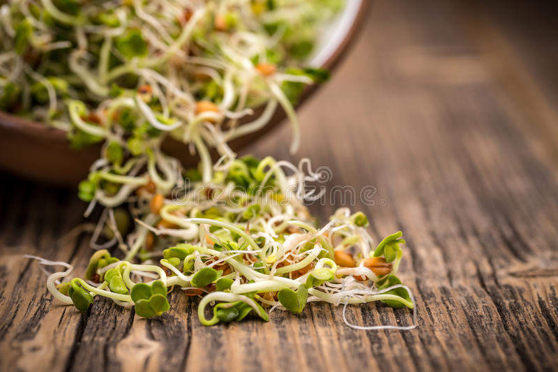 Mix of sprouted seeds. On a wooden background royalty free stock photography