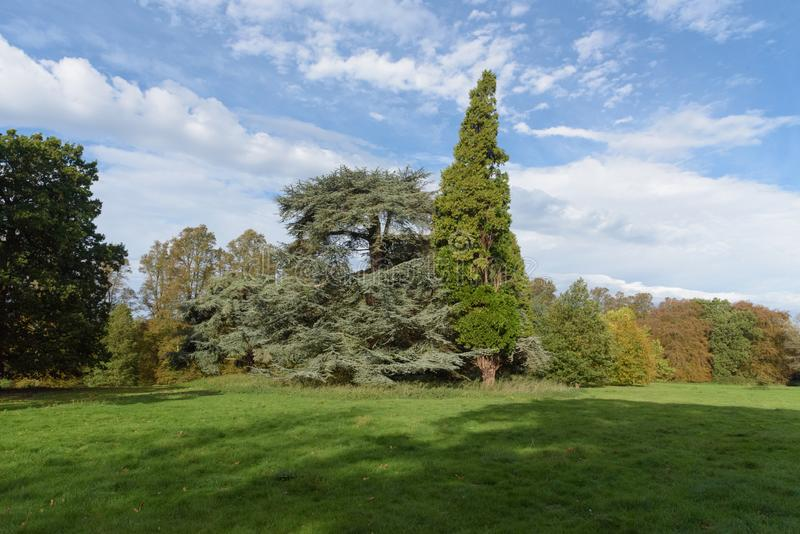 Mix of trees with contrasting colours in autumn at Nowton Park stock images