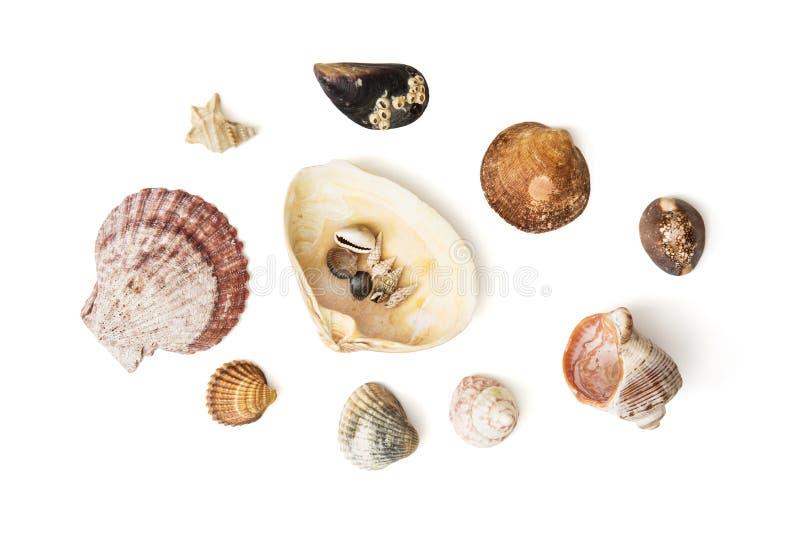 Mix of various sea shells royalty free stock image