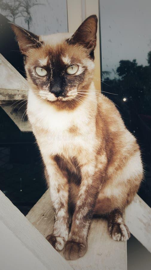 Mixbreed Cat Posing royalty-vrije stock afbeeldingen