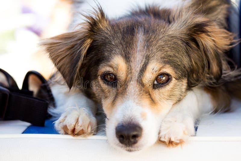 Mixbreedhond die op een de zomerdag rusten stock fotografie