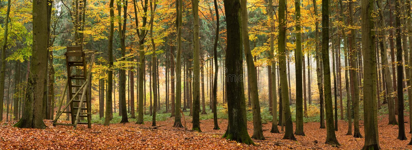 Mixed autumn forest panorama. Panorama of a foggy mixed forest in autumn. Vibrant deciduous trees grow in front of coniferous trees with a wooden raised hide for stock photo