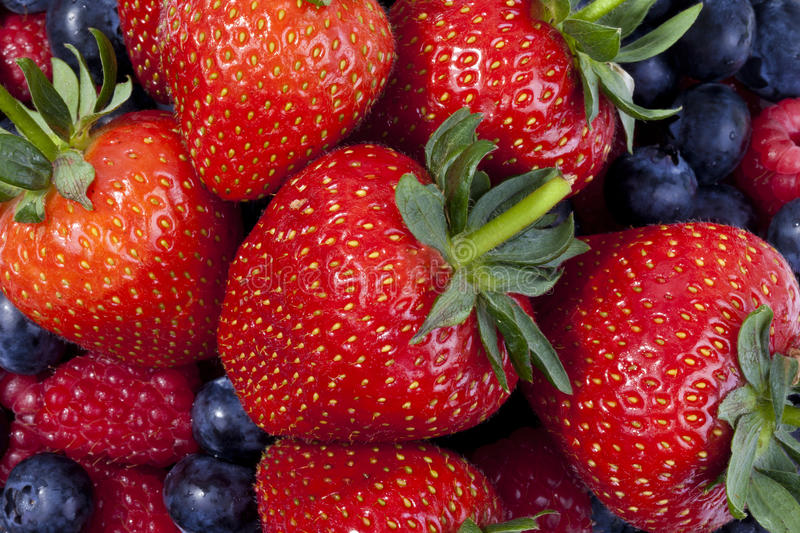 Mixed berries. High resolution image of mixed berries taken with a macro lens royalty free stock photo