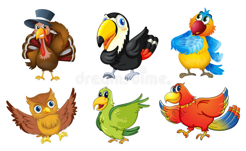 Mixed birds on a white background stock illustration