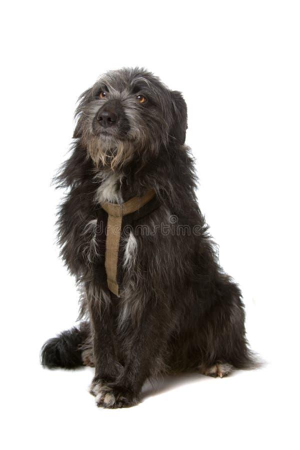 Mixed breed black dog royalty free stock photography